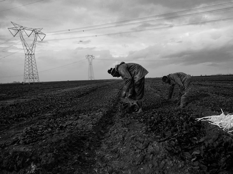 Dia Nacional de Combate ao Trabalho Escravo - o escritório AVM Advogados apoia essa causa